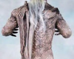 Jeepers Creepers screen-used costume and display