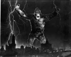 King Kong archive of camera negatives by Bachrach
