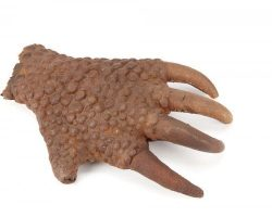 Original screen-used hand from The Mole People