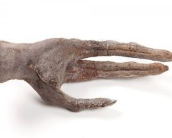 Gloved Alien creature hand from Aliens