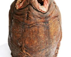 Alien Resurrection Mechanical Alien Egg