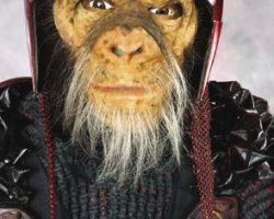 Chimp costume & display – Planet of the Apes