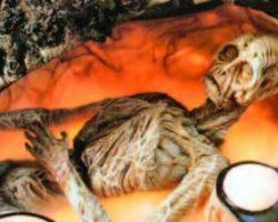 Full-size Anterean alien from Cocoon