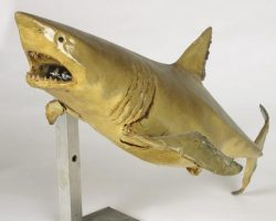 Articulated shark maquette from Jaws 2