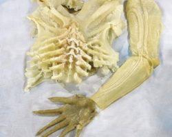 Prototype alien skin-suit from Alien