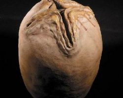 A prop Alien Egg