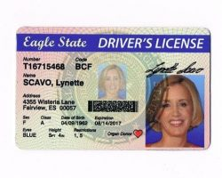 Desperate Housewives Lynette Scavo Prop Drivers License