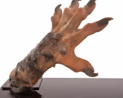 Rob Bottin Created Werewolf Hand From The Howling