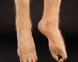 The Lost Boys Pair Of Vampire Bat Feet