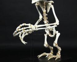 Full-Size Gremlin Skeleton GREMLINS 2: THE NEW BATCH